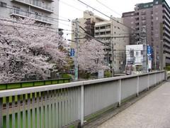 桜と荒川線 その一