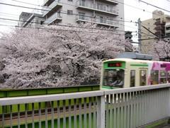桜と荒川線 その二