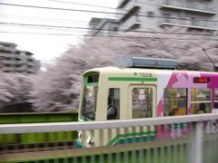 桜と荒川線 その三